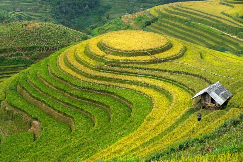 Padievelden op terrasvormig van Mu Cang Chai, Yen Bai, Vietnam royalty-vrije stock afbeeldingen