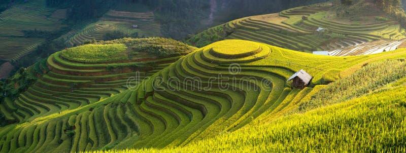 Padievelden op terrasvormig van Mu Cang Chai, YenBai, Vietnam royalty-vrije stock foto