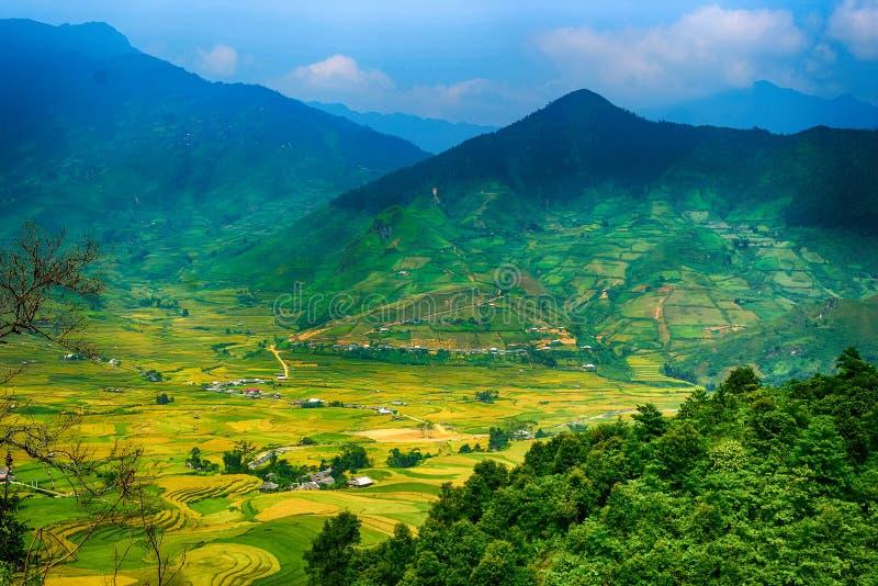 Padievelden op terrasvormig van Mu Cang Chai, YenBai, Vietnam De padievelden bereiden de oogst in Noordwestenvietnam voor De land stock foto's
