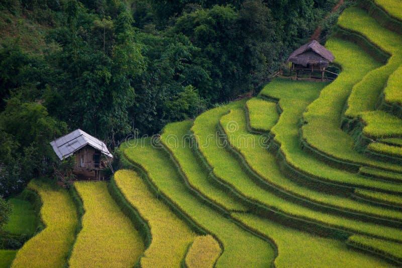 Padievelden op terrasvormig in zonsondergang bij Mu Cang Chai, Yen Bai, Vietnam stock afbeelding