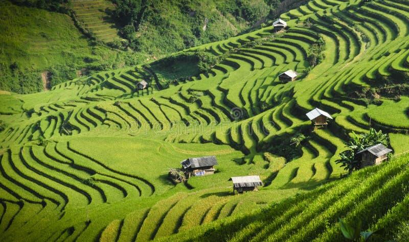 Padievelden op terrasvormig in zonsondergang bij Mu Cang Chai, Yen Bai, Vietnam stock fotografie