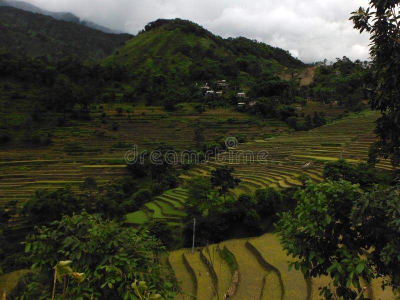 Padievelden van de Himalayan-Stad Bahundanda stock fotografie