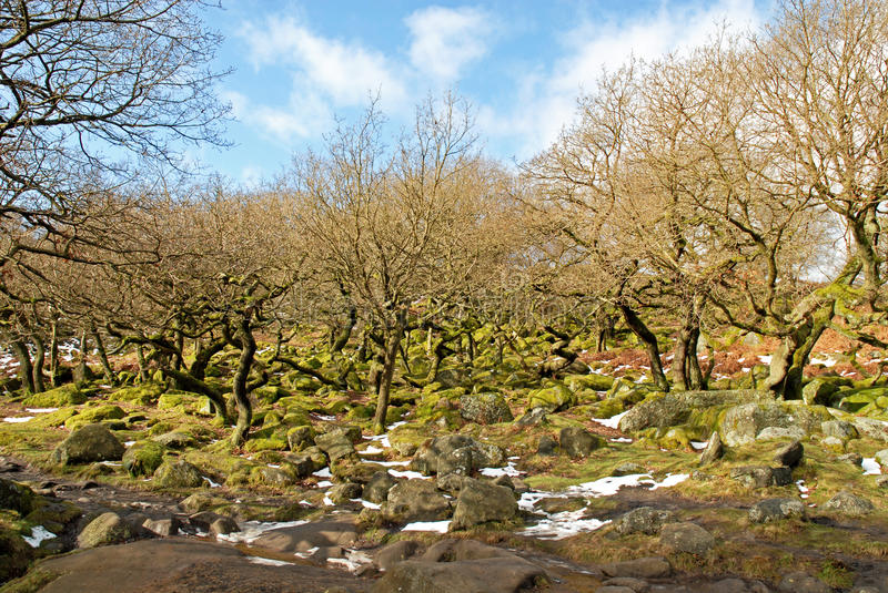 Padley Gorge Ancient Woodland Derbyshire royalty free stock photography