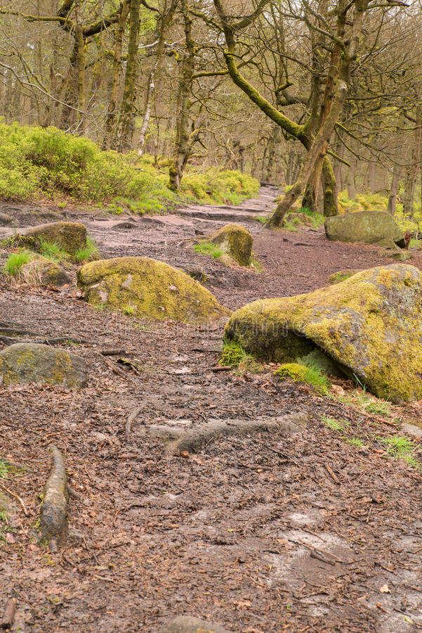 Padley Gorge in the Peak District. Image of twisted trees and moss covered rocks in Padley Gorge in the Peak District stock image
