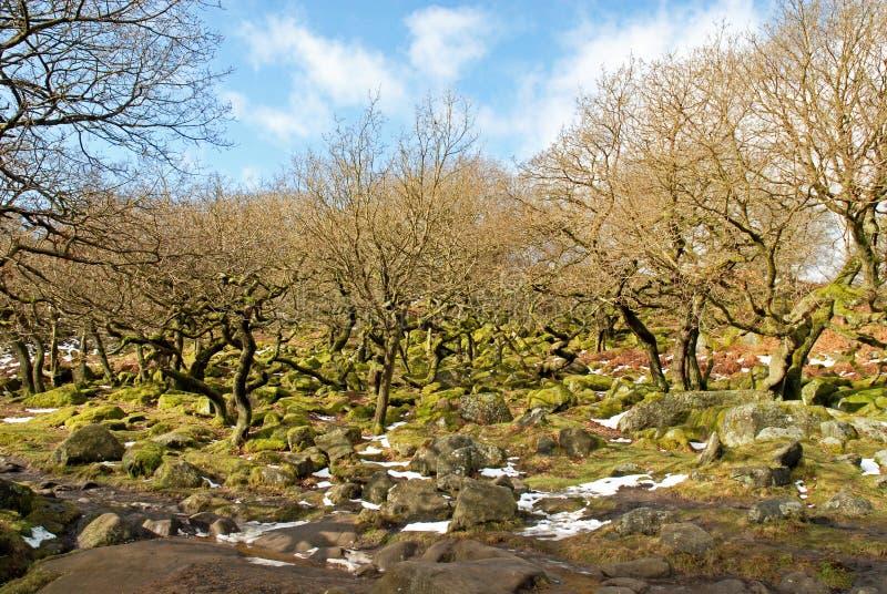 Padley Schlucht-altes Waldland Derbyshire lizenzfreie stockfotografie