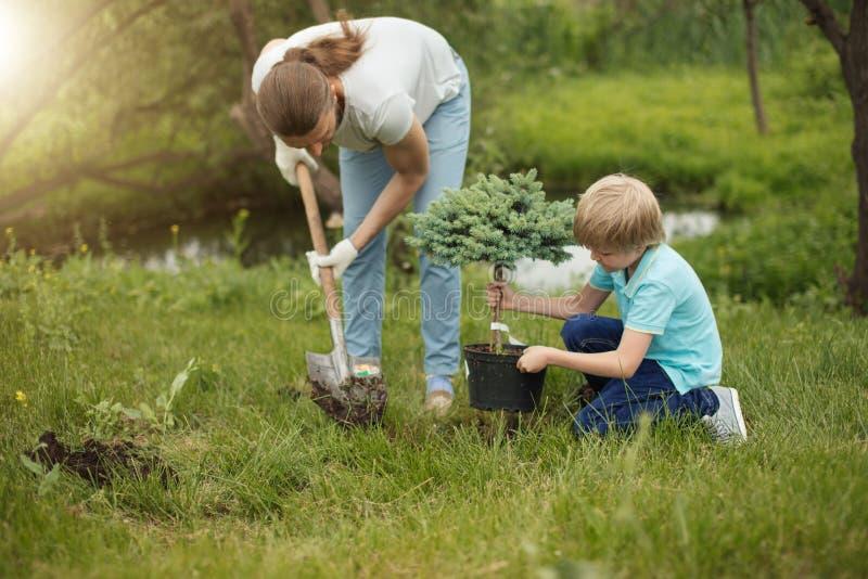Padre adulto sorridente ed suo figlio che piantano un albero all'aperto nel parco fotografie stock libere da diritti