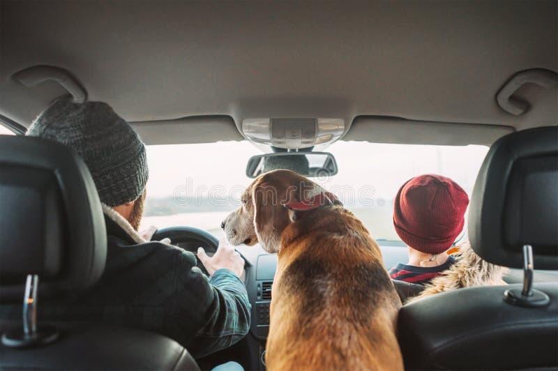 Padre con el perro del hijo y del beagle que viaja junto por la parte posterior auto s imagen de archivo