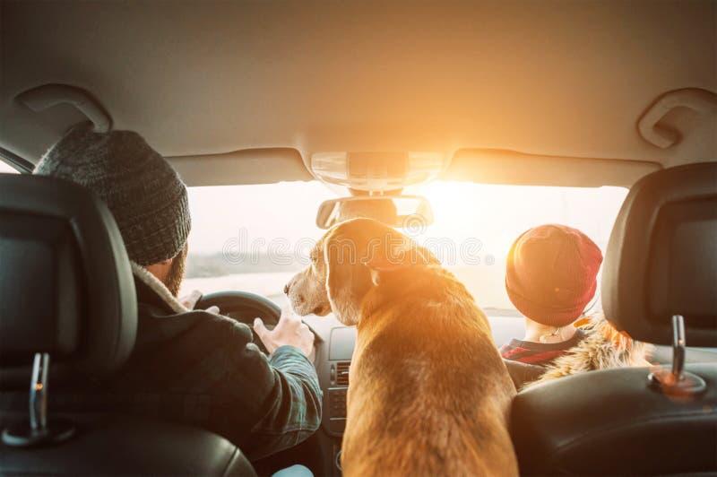 Padre con il cane del cane da lepre e del figlio che viaggia insieme dal tiro grandangolare automatico dei sedili posteriori fotografia stock libera da diritti