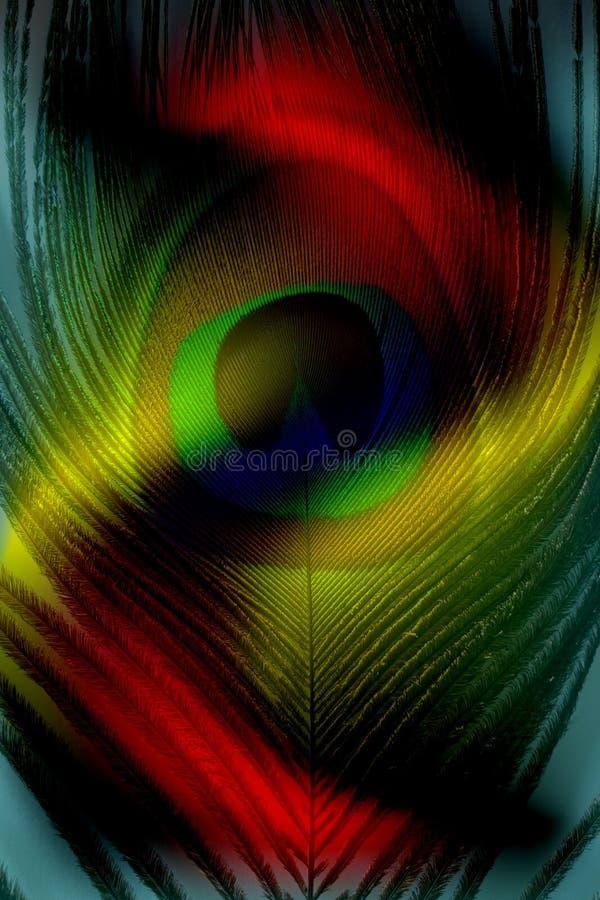Padre del pavone con fondo protetto multicolore astratto Illustrazione di vettore illustrazione vettoriale
