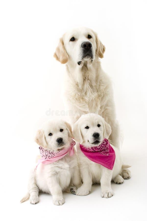 Padre e figlie immagine stock