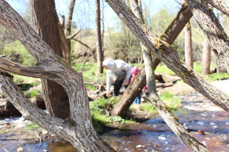 Padre e hija que caminan cerca del río del bosque imagenes de archivo