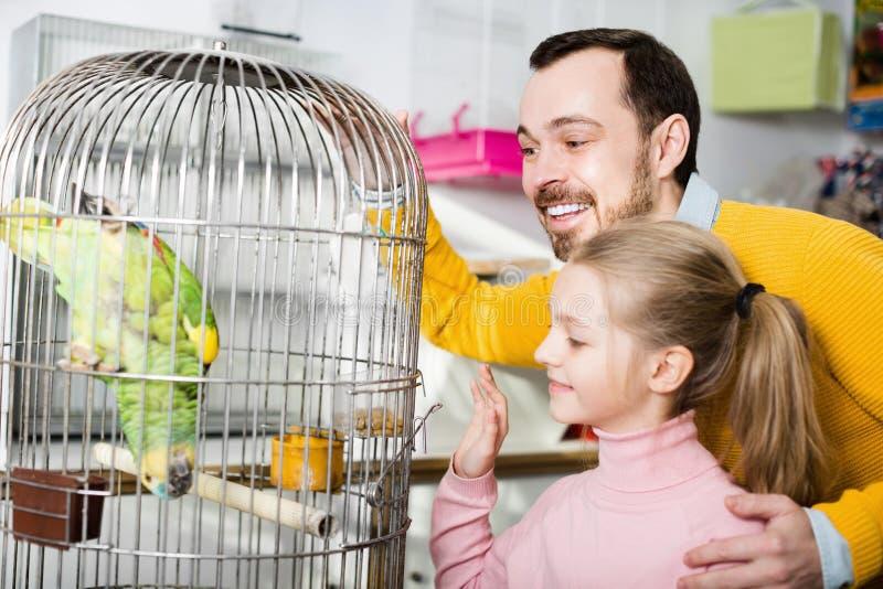 Padre y muchacha que miran el loro verde en tienda del animal doméstico imagen de archivo libre de regalías