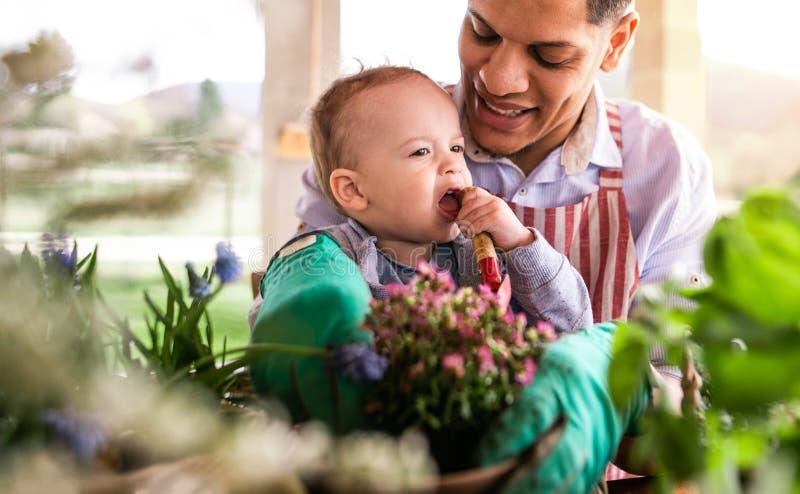 Padre y pequeño hijo del niño dentro en casa, plantando las flores fotos de archivo