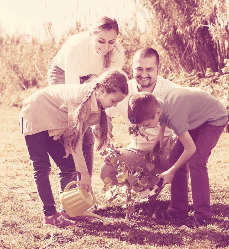Padres con dos niños que plantan un arbusto imágenes de archivo libres de regalías