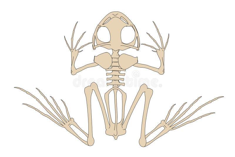 Padskelet vector illustratie