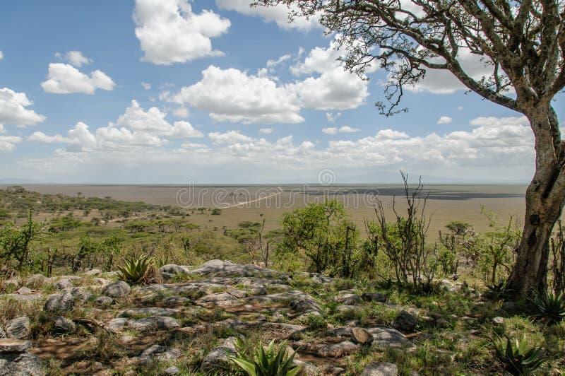 Paesaggi africani - parco nazionale Tanzania di Serengeti immagine stock libera da diritti