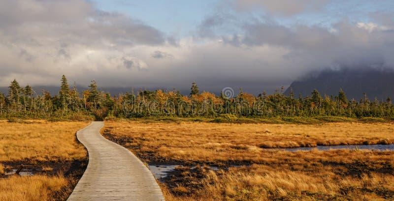 Paesaggi del lago e della montagna allo stagno occidentale del ruscello a Gros Morne National Park in Terranova, Canada immagini stock