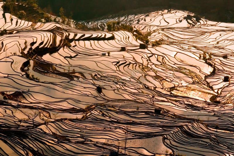 Download Paesaggi del terrazzo fotografia stock. Immagine di fattoria - 7323862