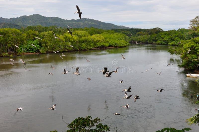 Paesaggi della penisola di Nicoya, Costa Rica immagini stock