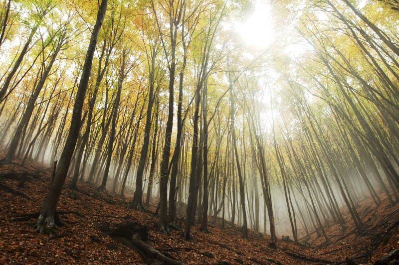 Paesaggi di autunno immagine stock libera da diritti