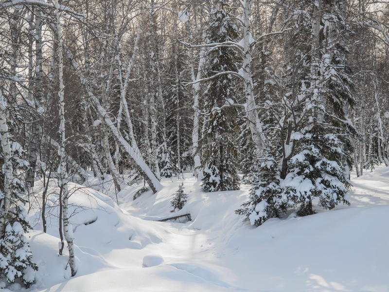 Paesaggi di inverno fotografia stock