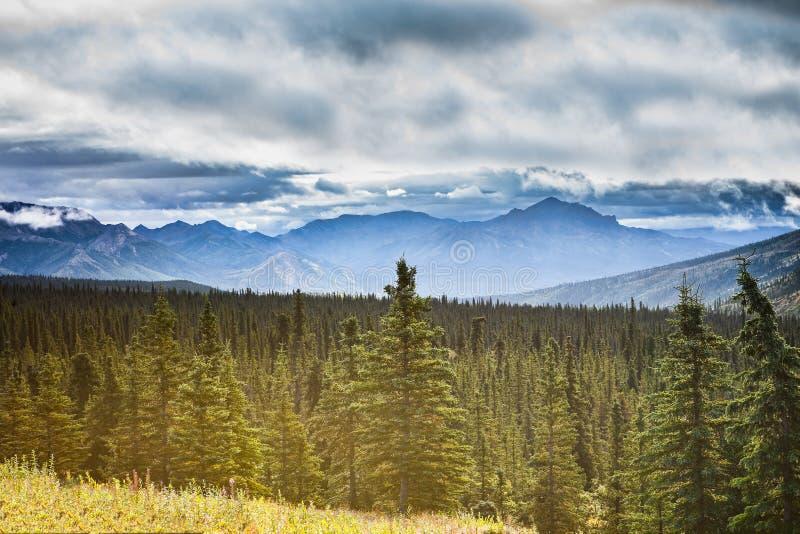 Paesaggio abbastanza d'Alasca nella sosta nazionale di Denali immagine stock libera da diritti