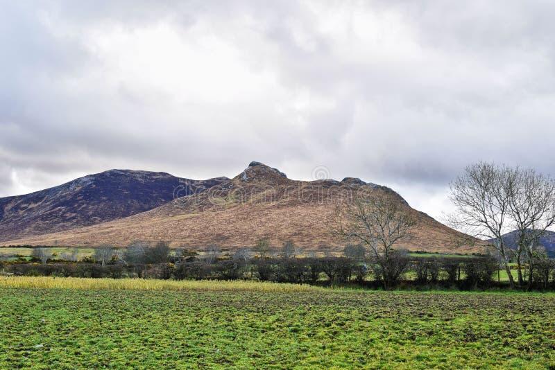 Paesaggio adorabile delle montagne con erba verde immagini stock