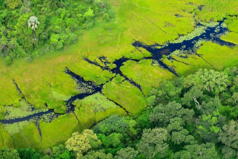 Paesaggio aereo nel delta di Okavango, Botswana Laghi e fiumi, vista dall'aeroplano Vegetazione verde nel Sudafrica Alberi con w fotografia stock libera da diritti