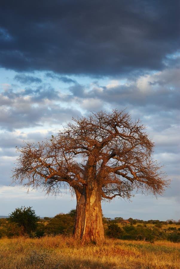 Paesaggio africano 2 fotografia stock libera da diritti