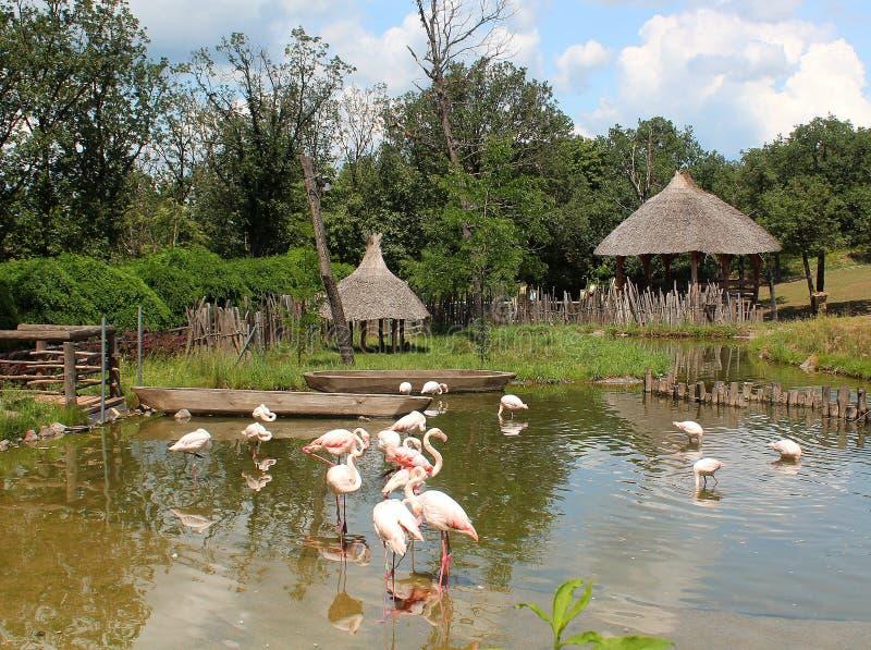 Paesaggio africano con il piccoli stagno e fenicotteri fotografia stock