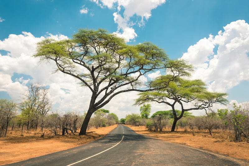 Paesaggio africano con la strada vuota ed alberi nello Zimbabwe immagini stock libere da diritti