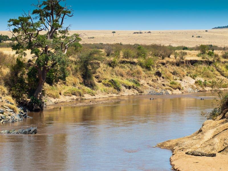 Paesaggio africano con un fiume e un coccodrillo  immagini stock libere da diritti
