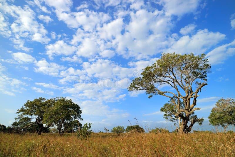 Paesaggio africano della savana - Sudafrica fotografie stock
