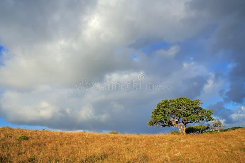 Paesaggio africano della savana - Sudafrica immagine stock libera da diritti