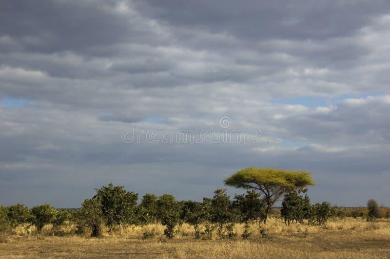 Paesaggio africano della savanna immagini stock libere da diritti