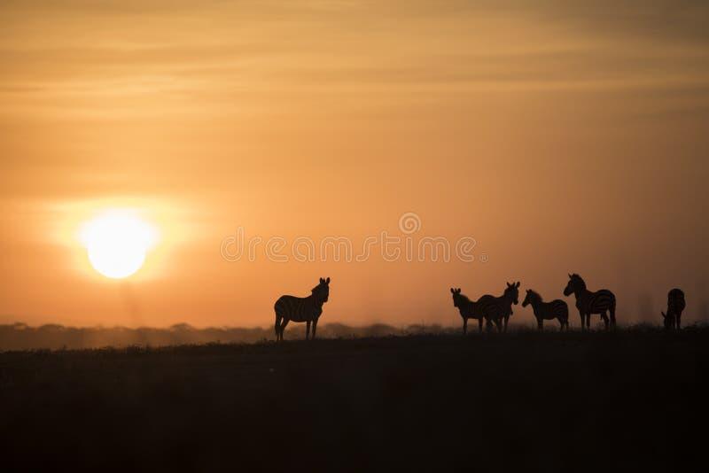 Paesaggio africano mentre nel safari immagine stock