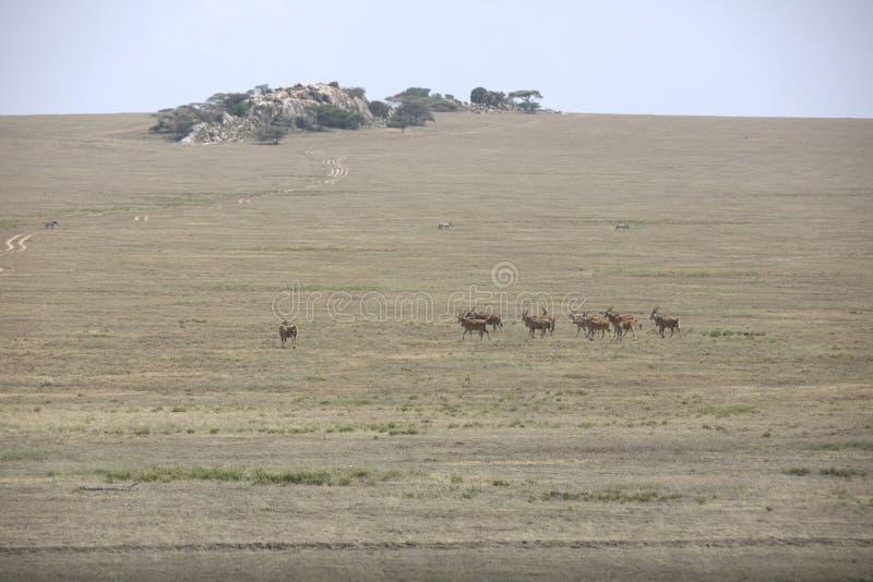 Paesaggio africano mentre nel safari fotografie stock libere da diritti