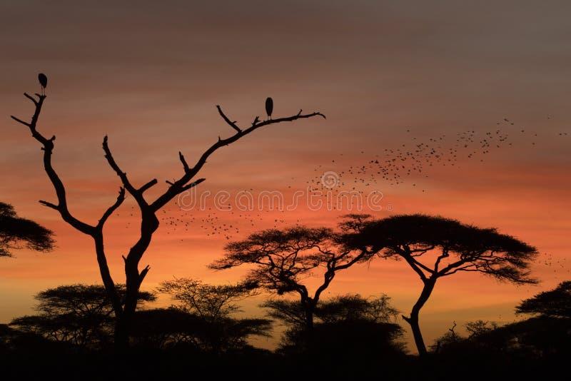 Paesaggio africano mentre nel safari fotografia stock