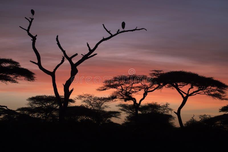 Paesaggio africano mentre nel safari fotografie stock