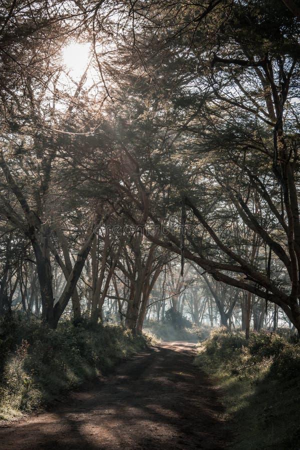 Paesaggio africano in nebbia di mattina vicino al lago Nakuru fotografia stock