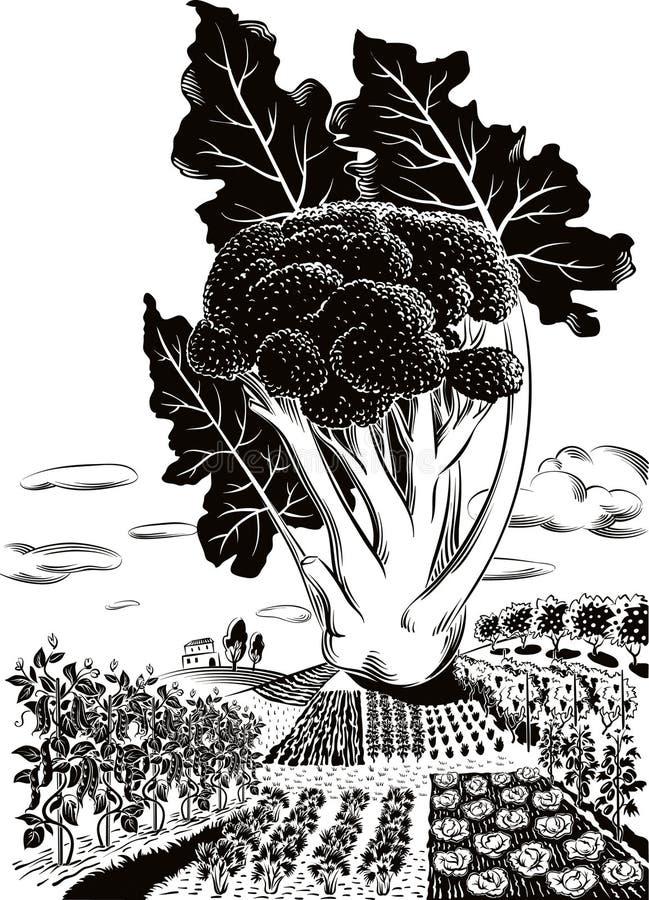 Paesaggio agricolo coltivato, con i broccoli illustrazione di stock