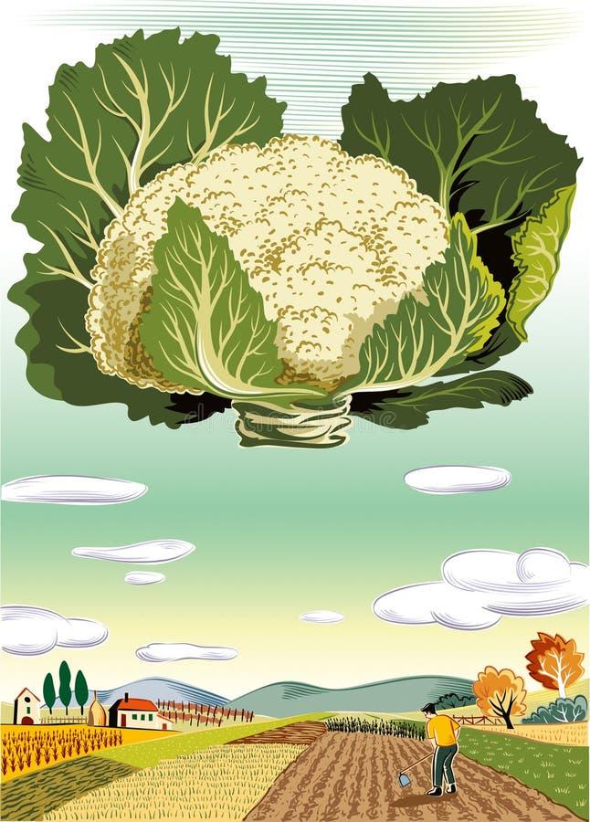 Paesaggio agricolo coltivato, con il cavolfiore illustrazione di stock