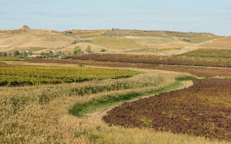 Paesaggio agricolo scenico dell'isola della Sicilia immagine stock libera da diritti