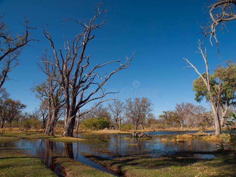 Paesaggio al fiume di Okavango fotografie stock libere da diritti
