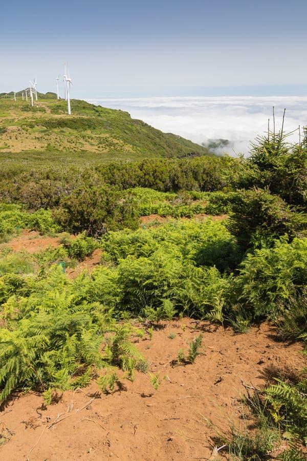 Paesaggio al plateau Paul da Serra, isola del Madera fotografia stock