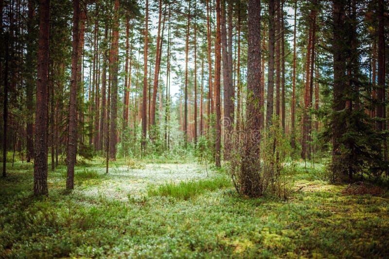 Paesaggio all'aperto del fondo di ecologia immagine stock libera da diritti