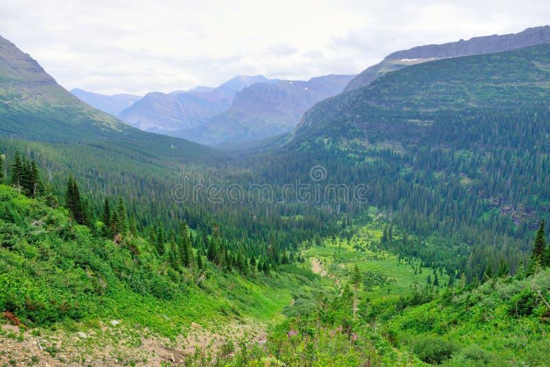 Download Paesaggio Alpino Del Glacier National Park Immagine Stock - Immagine di montagna, molla: 55357771