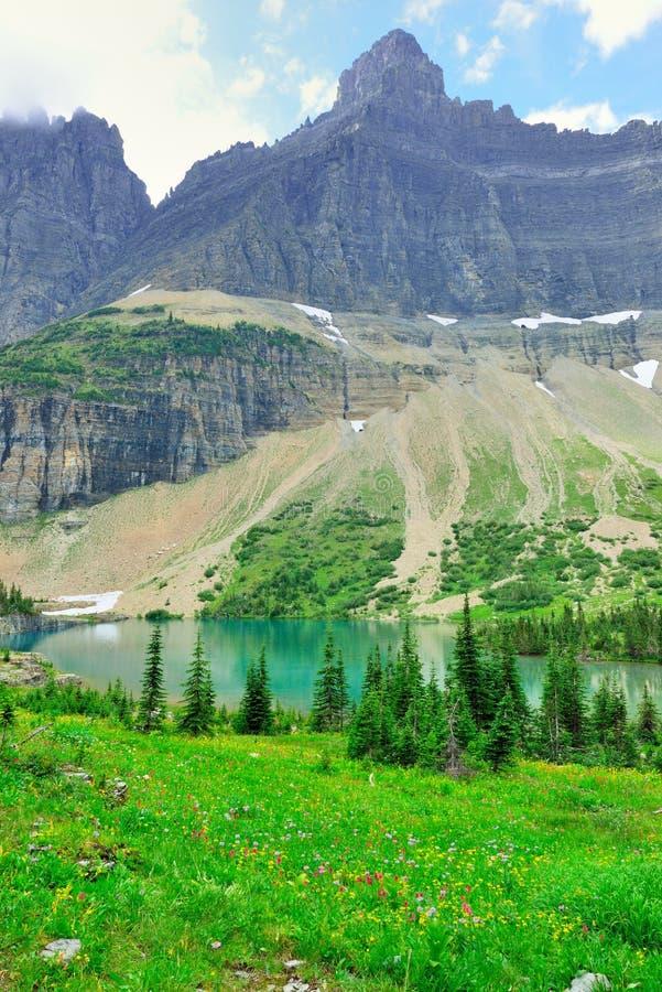 Download Paesaggio Alpino Del Glacier National Park Immagine Stock - Immagine di aumento, backpacking: 55358327
