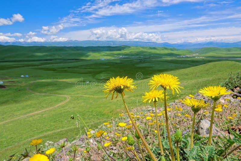 Paesaggio alpino del pascolo fotografie stock