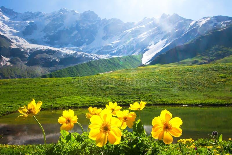 Paesaggio alpino della montagna con i fiori gialli su priorità alta il giorno luminoso soleggiato fotografia stock